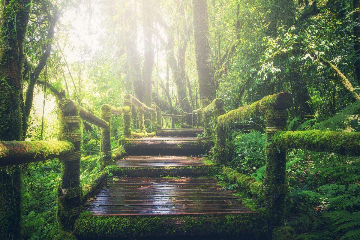 Balade contée: Forêt enchantée - Piney
