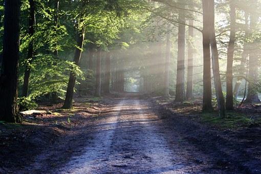 Balade dans la forêt de Saint-Imoges